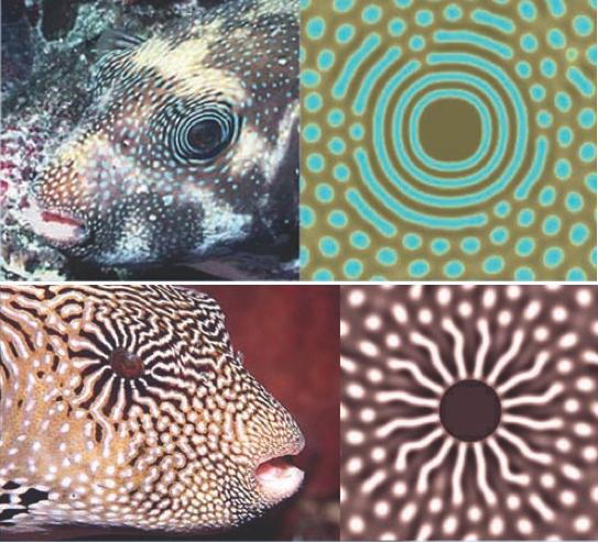 05fish